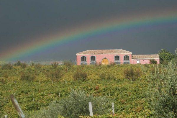 vini-wines-etna-sicily-calderara-sottana-08